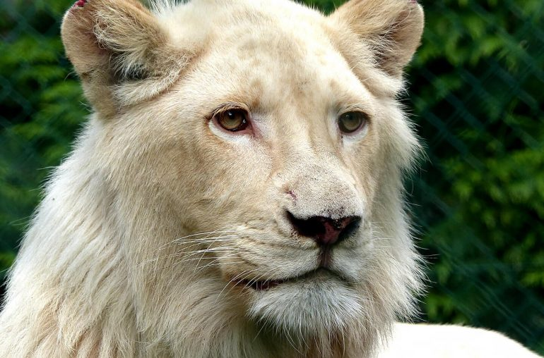 Olmense Zoo gesloten