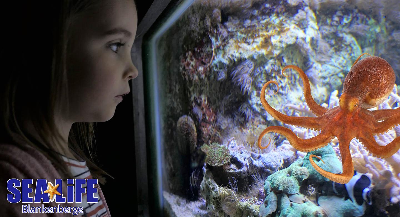 Sea Life Aquaria