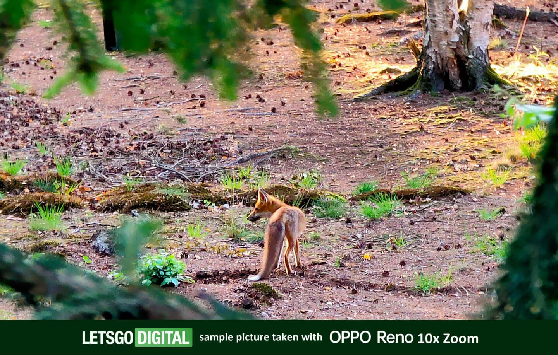 Oppo Reno 10x zoom test foto
